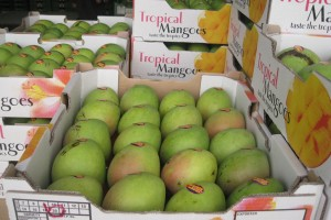 Mango produced at the plantation owned by a Hakka member in Darwin