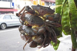 These crabs are quite big too 那儿的螃蟹也不小吔!